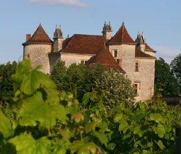bestemming_frankrijk_wijnveld.jpg